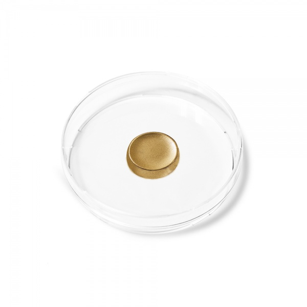 Shell Gold 23,75 carat small